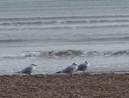 seagulls at the beach by KASAItora