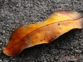 Fall by MARCOSVFG