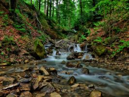 Forest stream by 75ronin