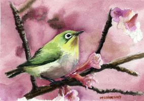 Bird watercolor by mirrorplex