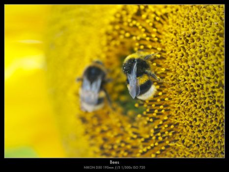 Bees by MathiasLM