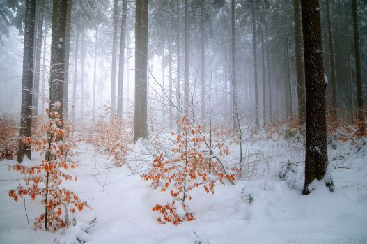 Mystery Of Cold by MarcoHeisler