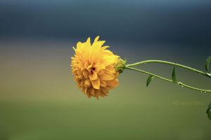 Hangin Yellow by aurionPhoG