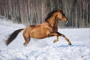 Gold on the snow by Vikarus