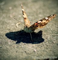 Butterfly by geeson