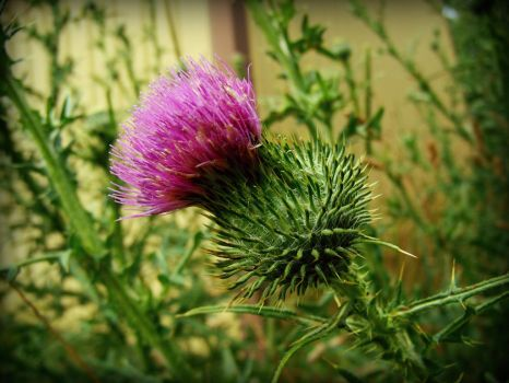 spikes of nature 3 by Foreigner227