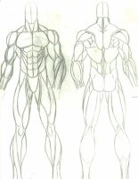anatomy study:male by faust40