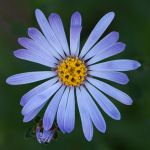 flower 185 by EphemeralMind