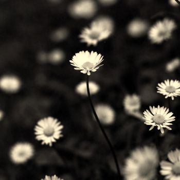 .:white part.: by neslihans