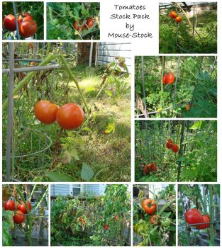 Tomatoes Stock Pack by Mouse-Stock