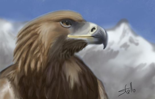 Eagle by lz1991