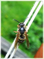 skinny wasp by suicidesheep