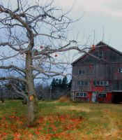 Brookfield Orchards by DelilahDugo