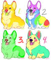 Corgi Adopts by Kiboku