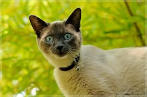 chat curieux by Balto-Wolf