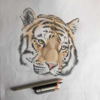 Realistic drawing of a Tiger by LaetitiasPortraits