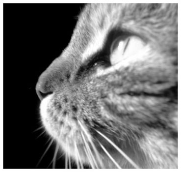 Cat's Profile by Orteilgrotesque
