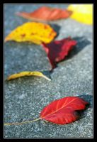 Autumn is a Rainbow of Change by TeaPhotography