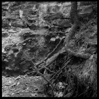 2013-151 Root and wall. by pearwood