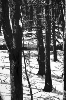 Snowy Trees by Combak