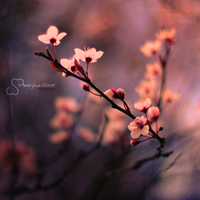 From Blossoms by MaaykeKlaver
