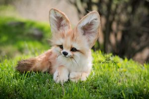 For Sale! Auction Handmade Poseable toy Fennec Fox by MalinaToys
