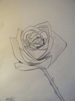 A Simple Rose on a Stem by xxpencildreamsxx