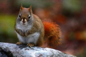 Another Squirrel by XxQuothTheRavenxX