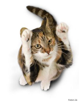 Angie Paws up by hoschie
