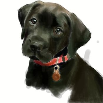 Black Lab w.i.p by xXhayleyroxXx