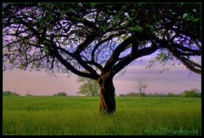 Sunset Tree by allym007