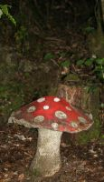 Toadstool by Rivendell-PhotoStock
