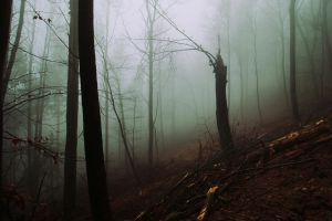 The grim forest II by Malleni-Art